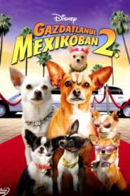 Gazdátlanul Mexikóban 2.
