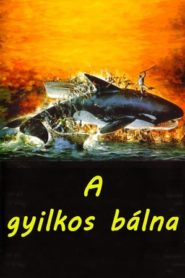 A gyilkos bálna