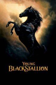 A fekete paripa – Az első kaland
