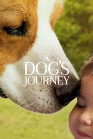 Egy kutya négy útja online teljes film